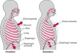 diaphragm breathing